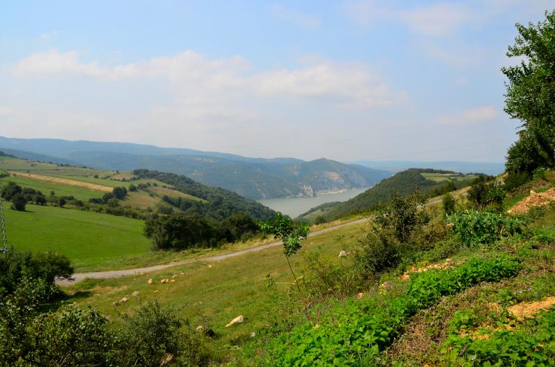Garnic Dunare mic