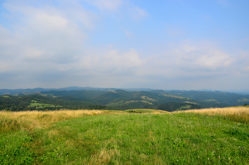 Garnic Dunare mic_29